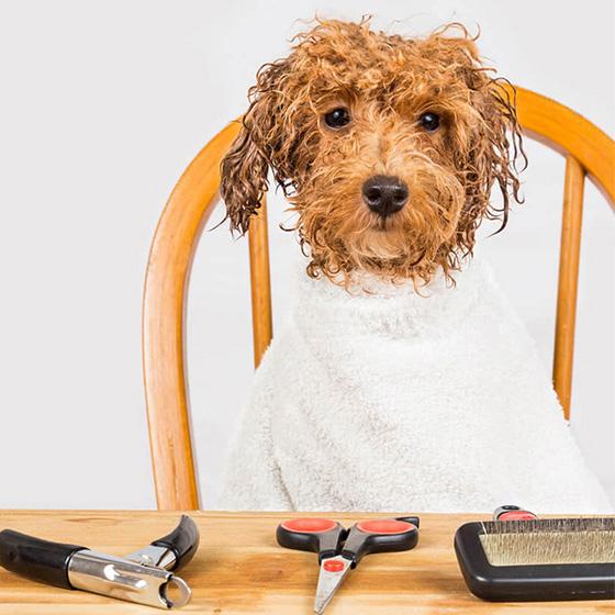 salon coafura canina skiper agentie publicitate 21vision oradea